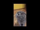 Кот говорит- 'Голова моя болит'.mp4