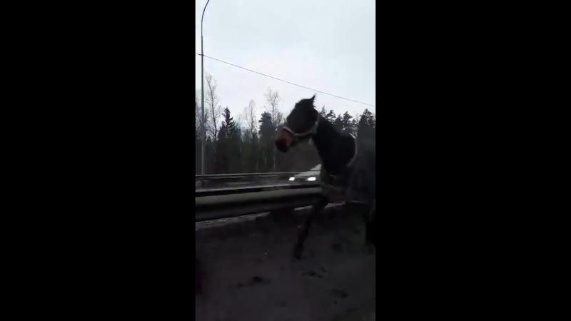 Табун лошадей в Петербурге