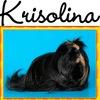 КРИСОЛИНА - породистые морские свинки