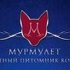 Мурмулет - элитный питомник кошек