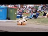 Упрямый пёс притворился мёртвым, чтобы не уходить из солнечного парка