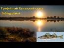 Fishing Planet - Трофейный Канадский судак (Sander canadensis)