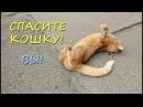 СПАСИТЕ КОШКУ! Ласковая рыжая кошка ОКАЗАЛАСЬ НА УЛИЦЕ! СКОРО МОРОЗ!