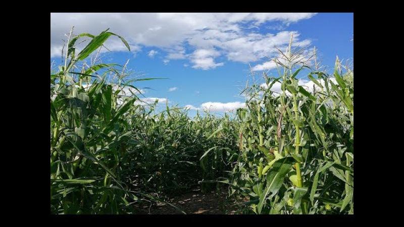 Германия Кукурузный лабиринт ВЛОГ Выходного дня