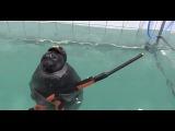 Seals With Guns