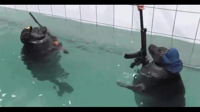 Мою стену охраняют морские котики