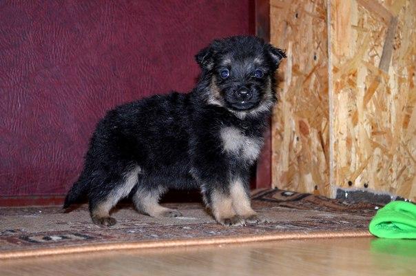 В ДОБРЫЕ РУКИ !!! Новые фото щенков, найденных у ГМ «Карусель».  Щ