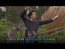 Репортёра Би-би-си «атаковали» лемуры во время съёмки сюжета в зоопарке