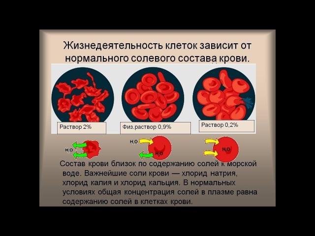 Валентин Трум и здоровье: О роли соли в клетках и крови!