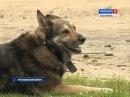 Растерзаны 248 животных в Костромском районе считают ущерб от ночного налёта чет...