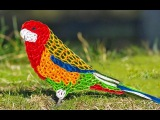 quilling artwork  Hand made Easy making beautiful parrot