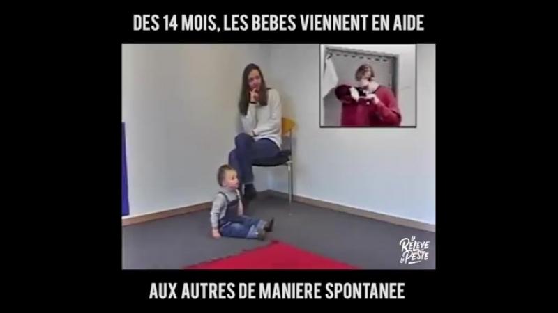 • Vidéothè(K)que • Les études des psychologues allemands Félix Warneken et Michael Tomasello, ont montré que les jeunes enfants