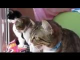 Беседа трёх котиков