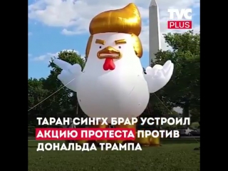Гигантская надувная курица с прической Трампа появилась у Белого дома