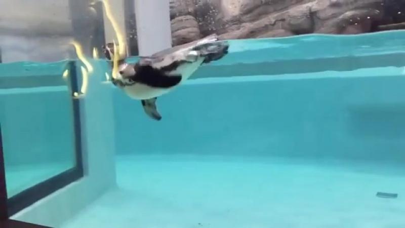 Новенький в нашем зоопарке