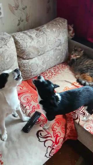 Юля, Катя и Боня