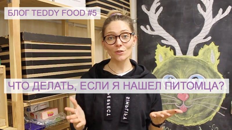 Блог TEDDY FOOD №5: Что делать, если нашли питомца