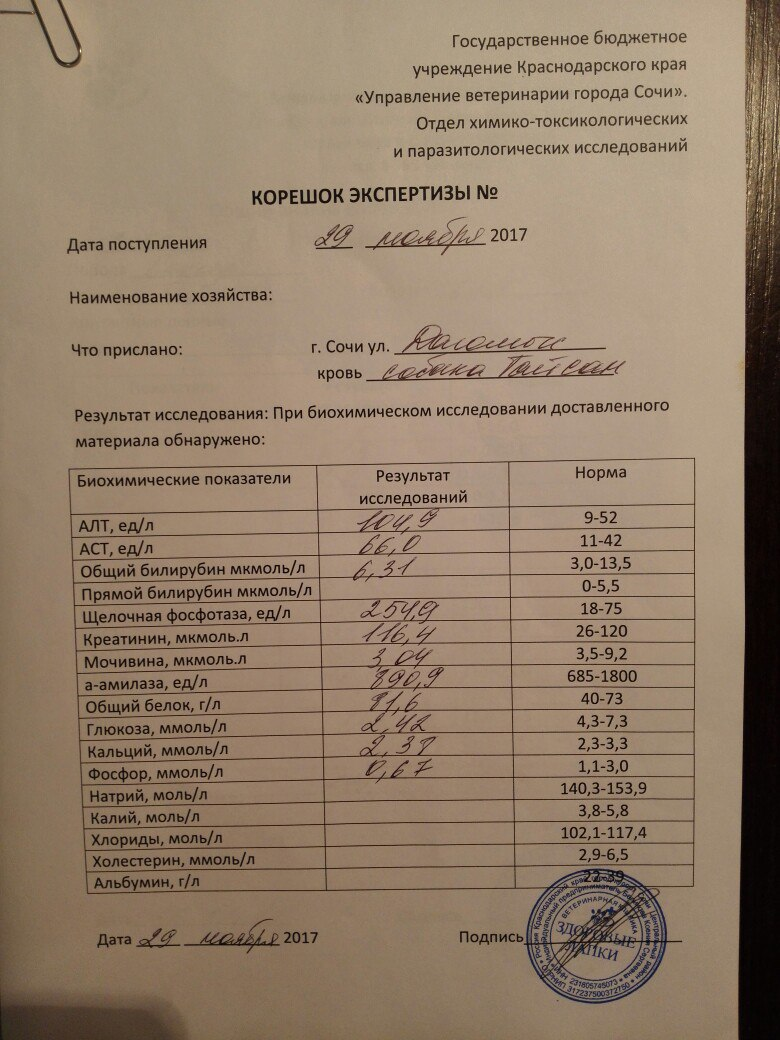 Москва, Саймон, кобель, 17.11.2009 - Страница 2 9nSiBbryHIQ