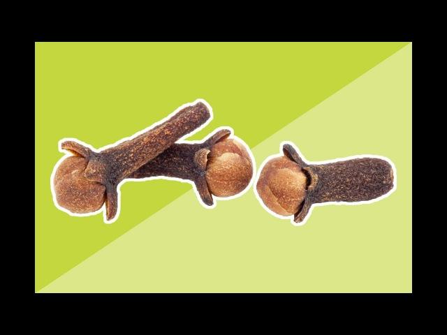 Зачем жевать СУШЁНУЮ ГВОЗДИКУ Лечебные свойства гвоздики впечатляют