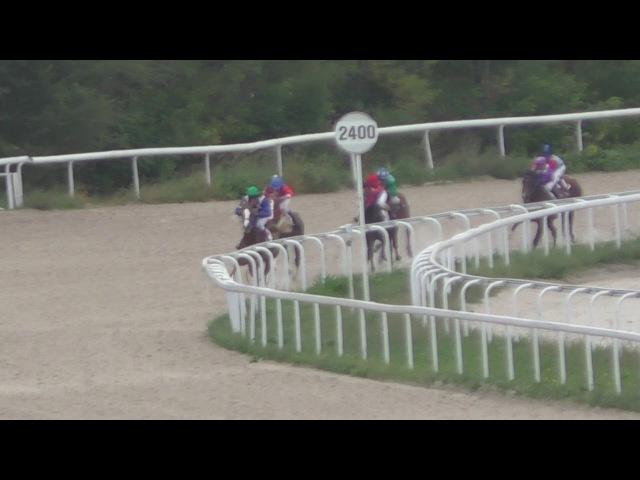 24.09.17 - Осенний приз на лошадях 2-х лет арабской породы. Панкратион
