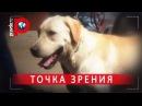 Собачья работа Лучший пес-полицейский в Москве