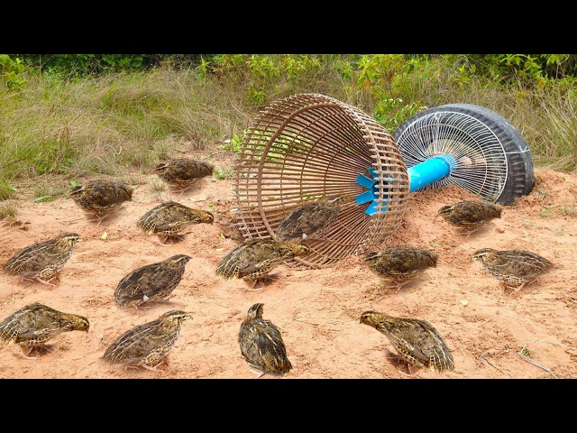 Awesome Quick Bird Trap Using Tire Car And PVC - How To Make Bird With Water Pipe Work 100