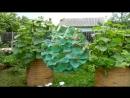Грядки для огурцов идеи для дачи сада и огорода от дачников садоводов своими руками хенд мейд