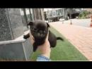 милый щенок , очень милый