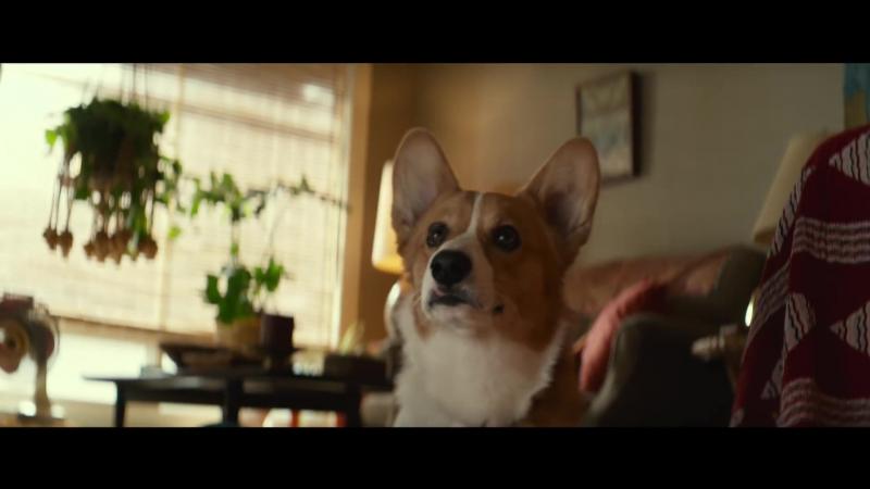 2017 › трейлер фильма Собачья жизнь