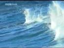 ВВС дельфины - самые умные животные в мире