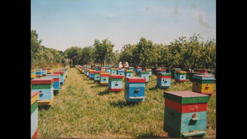 Пчелопакеты,пчеломатки:бакфаст,карника.т.89603022455
