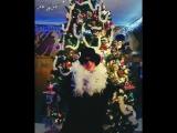 Поздравление с Рождеством от Перевертины