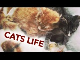 Cute cats or How to be a kitten  Funny sweet cats  Смешные коты и кошки 2017