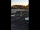 Собачка в клубничке