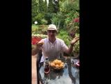 Как правильно есть абрикосы (лайфхак)
