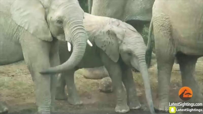 Черепаха чудом выжила после нашествия слонов