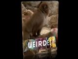 Самые странные в мире. Запреты мира животных. Развратники / 2013 / Full HD
