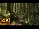 4K Virtual Forest Walk along Middle Fork Trail at Snoqualmie region Part 1 3 HR Relax Music