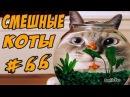 Смешные Коты и Кошки До Слёз Топовая Подборка Приколы с Котам Funny Cats 2017