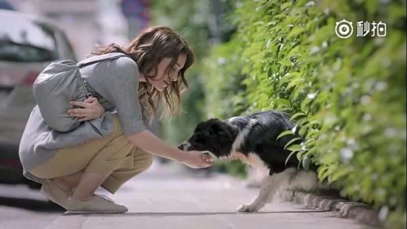 Спасение одной собаки не изменит мир, но мир несомненно изменится для этой одной собаки…