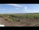 Мотопомпа ПСМ орошает поля кукурузы в Черкесске