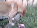 Video-2011-01-03-06-31-