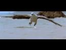 Орёл против ядовитой Змеи
