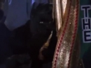 Кисточки и кот Селем