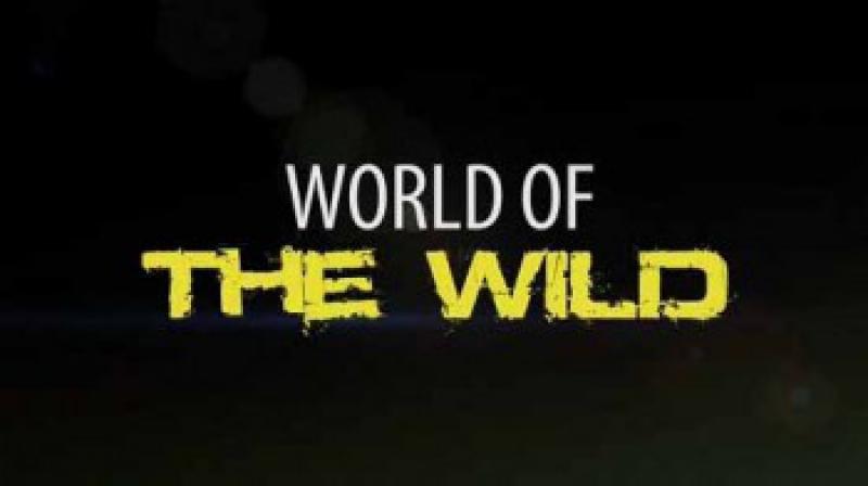World of the wild - Мир дикой природы Джунгли Южной Америки ( Дикая Природа )
