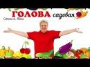 Голова садовая - Рецепт домашнего облепихового масла
