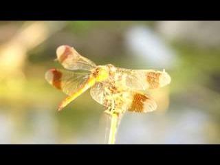[Sony A6000] Природа Донбасса / Spirit of summer