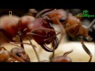 патологический раб видеоролики - 11