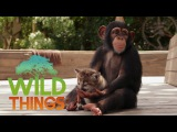 Animal Odd Couples Full Documentary Wild Things