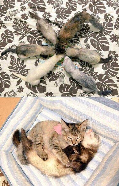 IEkoYlNroaY - Кот, выросший в семействе хорьков